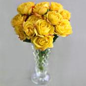 Long Stem Roses Yellow