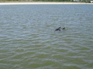 Savannah dolphin tour