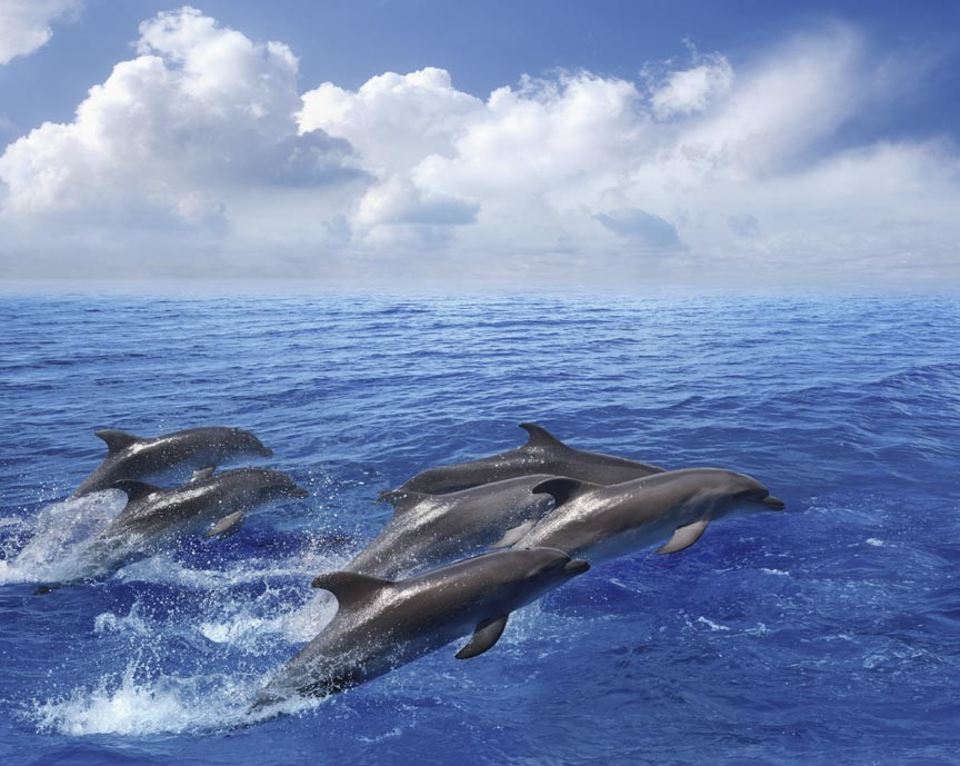 Take a Savannah dolphin cruise with Dolphin Magic!