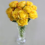 Long Stem Roses Yellow