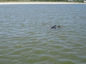 Savannah dolphin tour