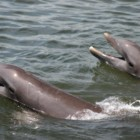 Get out on a Savannah dolphin tour!