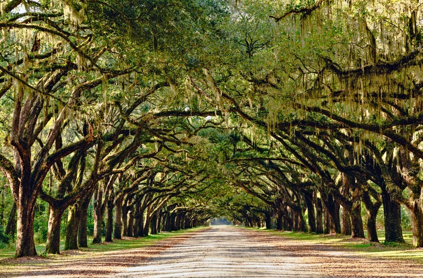 Wormsloe Plantation Live Oak tunnel
